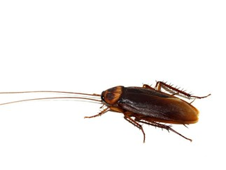 This Zoo in New York will let you name a cockroach after your ex this Valentine's Day