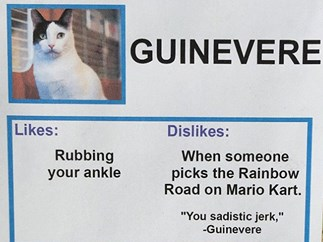 Comedian gives homeless cats list of likes and dislikes