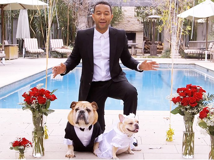 Please enjoy this photo of John Legend at the wedding of his pets.