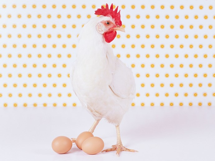 VIDEO: Why is this chicken so fkn big?
