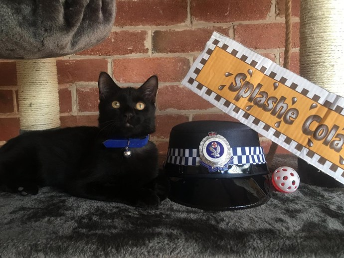 This NSW police department has adopted a stray kitty and we can't deal with this