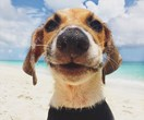 6 must-do holidays for animal lovers