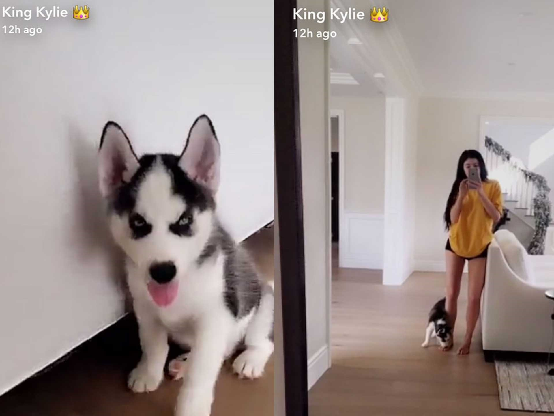 "Kylie Jenner has just extended her pooch family *again* by adding a puppy Husky!!  ""He's having a hard time fitting in lol,"" she wrote on Snapchat, debuting her newest woofer.  She also shared [a video](https://www.instagram.com/p/BN6Lu_kleYs/) of the puppy playing with Khloe, and it's just too much."