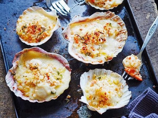 Creamy scallop gratin