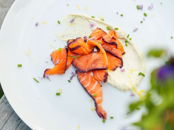 Miles' blackcurrant-cured salmon