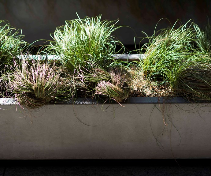 Planted inside the trough is hardy *Carex* 'Frosted Curls', a grass with brown-green tones that provides visual and textural contrast. The strands of grass have been woven into rounded shapes for an unexpected twist.