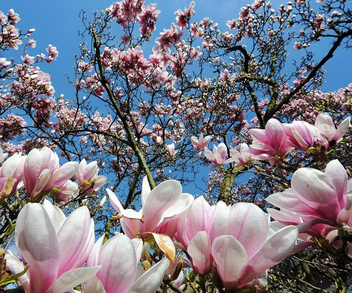 Get Blooming Spring Garden Care Tips Homes
