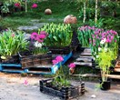 What flowers to plant in September