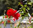 Essential winter gardening tips