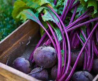 Homegrown beetroots