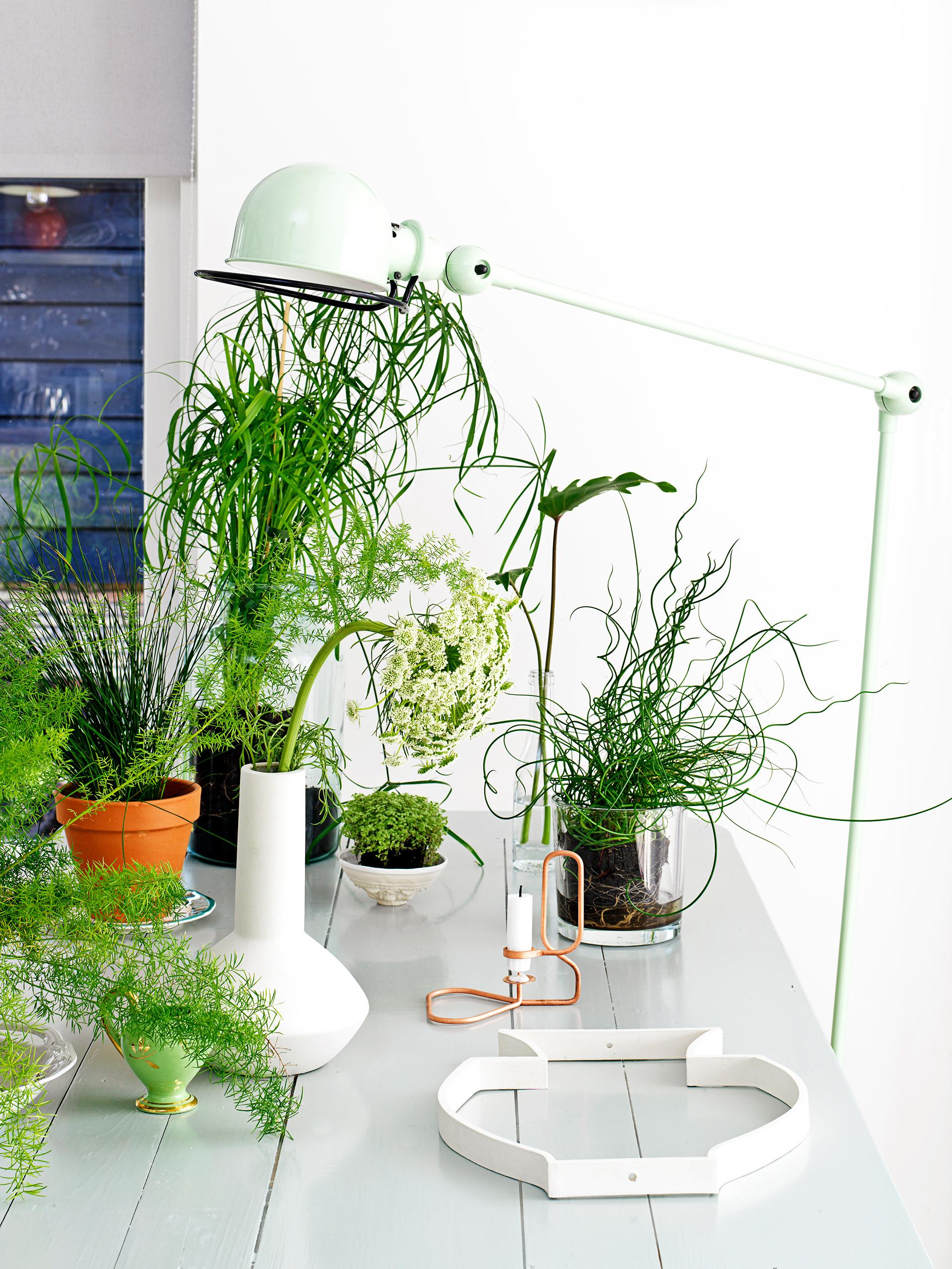 Unique Indoor Plants #27: Easy Being Green: Cool Indoor Plant Ideas