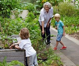 Family backyard veggie garden