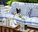 6 creative ways to make your home more pet-friendly