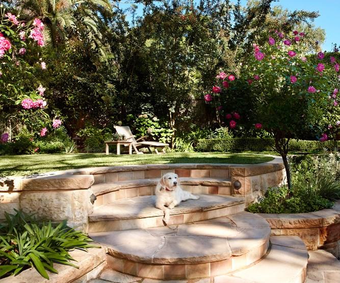 dog friendly garden