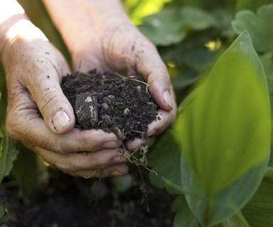 How to start a compost garden