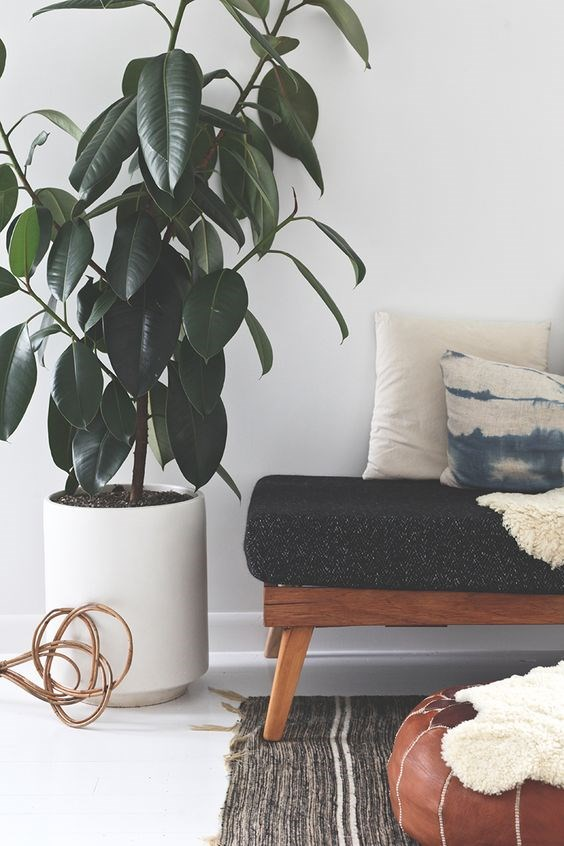 "Get more info on [how to choose the perfect indoor plant here](http://www.homestolove.com.au/take-5-lauren-camilleris-top-tips-on-indoor-plants-2964|target=""_blank""). Photo: via [Black Bird](http://theblackbird.co.nz/