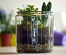 What is a terrarium and how do I make one?
