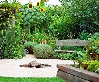 productive urban garden