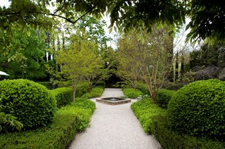 garden hedging