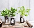 Grow your own Mediterranean herbs
