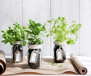 herbs in glass jars