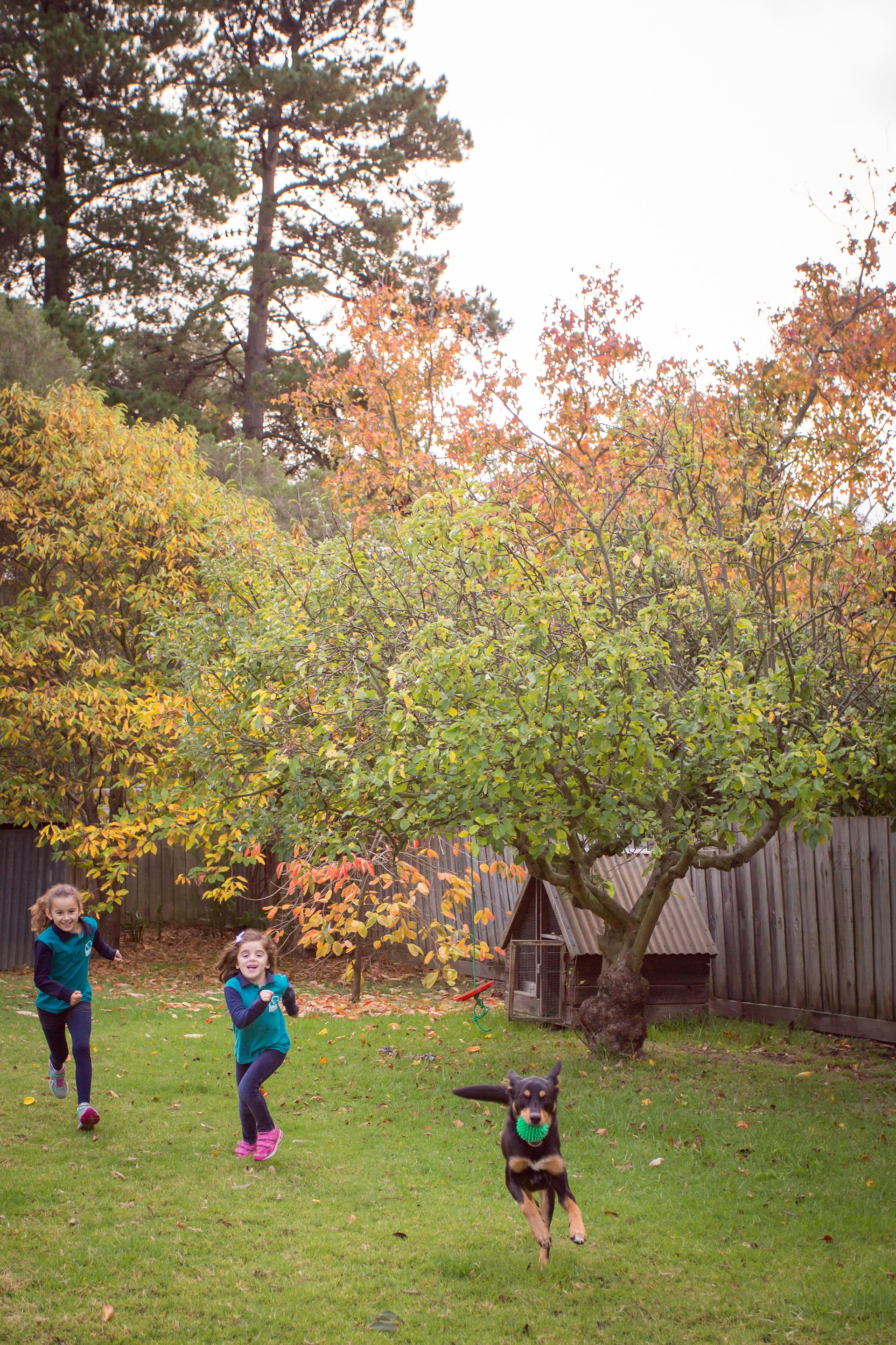 "**Retain any established trees** – big old trees command respect yet require minimal attention. [Take a tour of this art-filled family home](http://www.homestolove.com.au/family-of-four-turns-temporary-house-into-a-home-3781|target=""_blank""). *Photo: Katherine Jamison*"