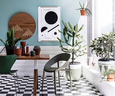 3 indoor plants that remove toxins from the air