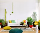 Interior greenery: plants for small spaces
