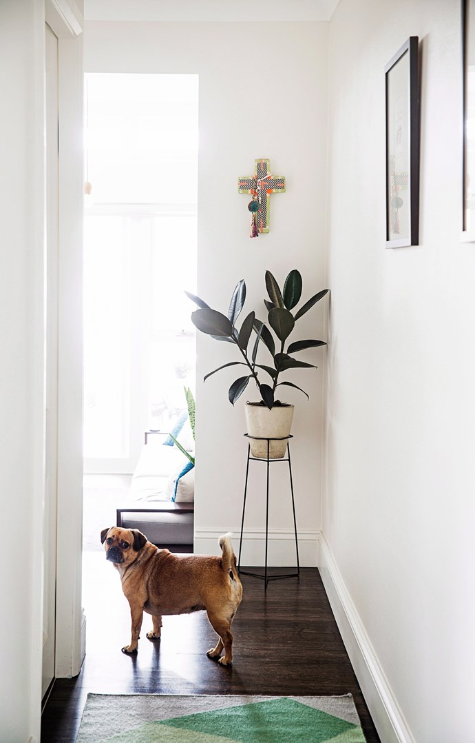 A stand elevates your plant to new heights. Photo: Chris Warnes / bauersyndication.com.au