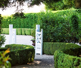 Top 5 plants for hedging