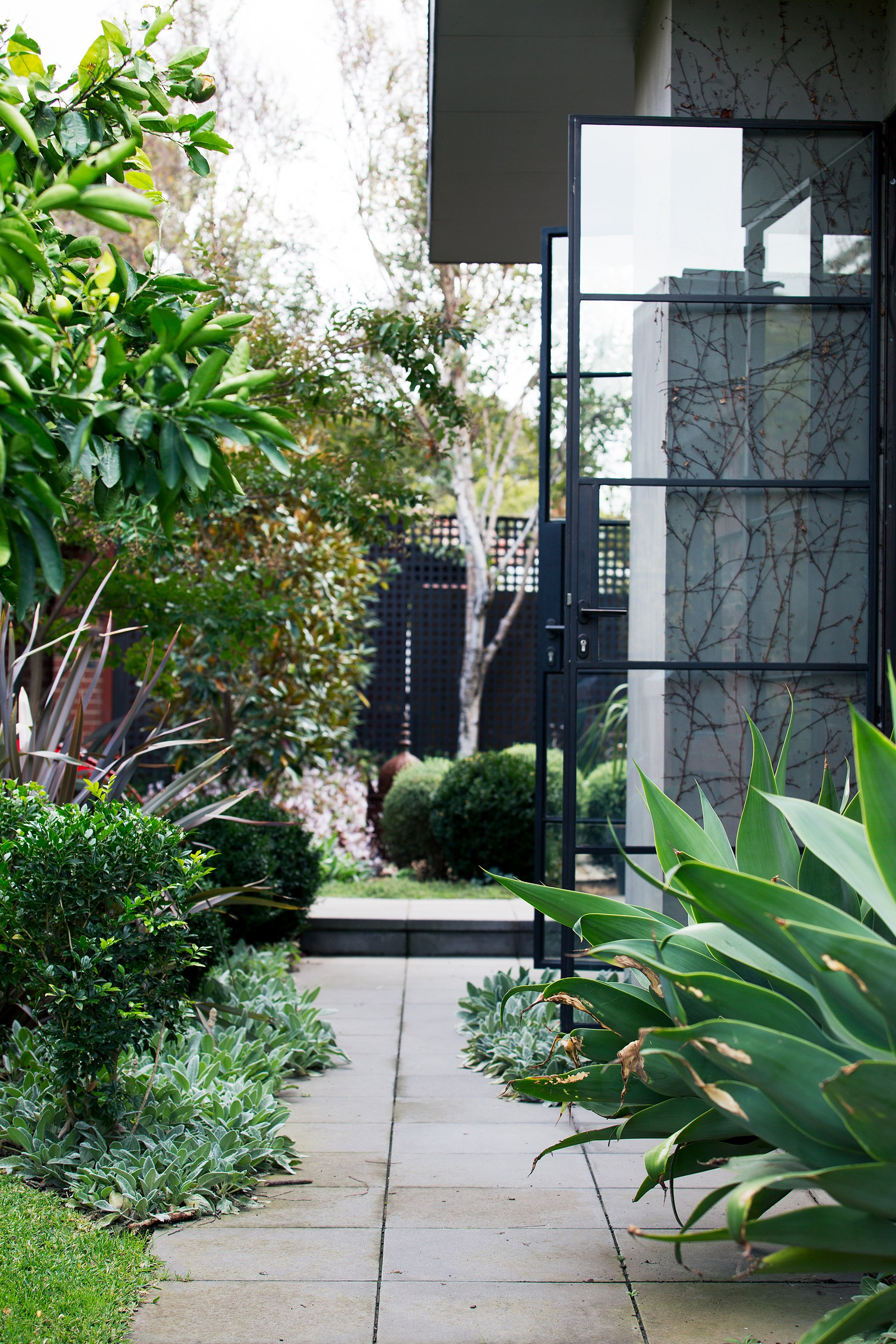 """Antra's brief for the side garden was to """"keep it traditional"""", and to retain the lawn and existing trees. To ensure privacy, Amanda installed a grove of birch trees. Existing clivias were padded out with mass plantings of Echium in order to create a thick boundary."""