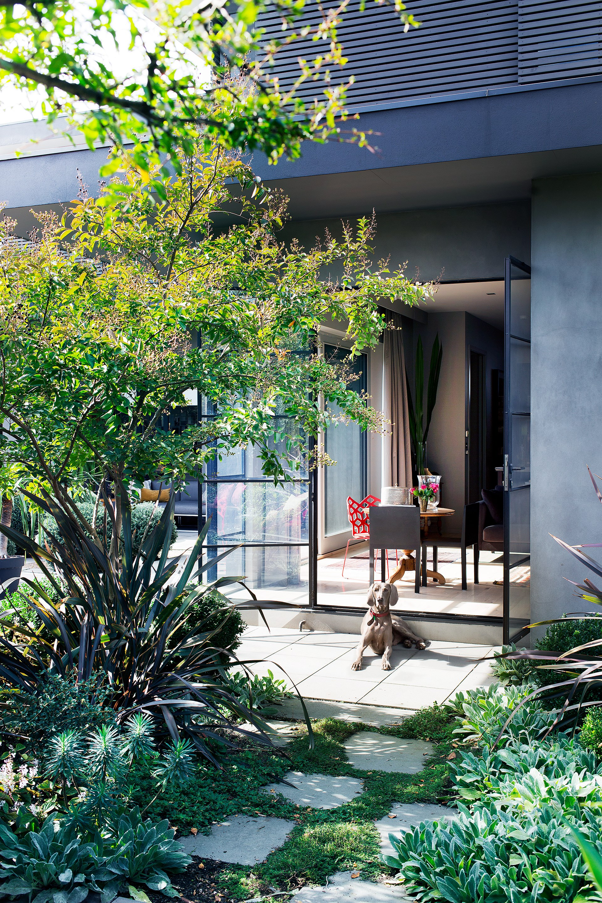 Eiffy enjoys some downtime in a patch of sunlight. Amanda used a mix of screening and accent plants to differentiate spatial zones and create both private pockets and dramatic points of intersection.