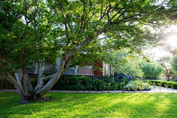 """""""We left all the big trees, as it was important that the garden felt established and timeless. They really make the space feel grounded,"""" says landscape designer [Peter Fudge](https://www.peterfudgegardens.com.au/ target=""""_blank"""")."""