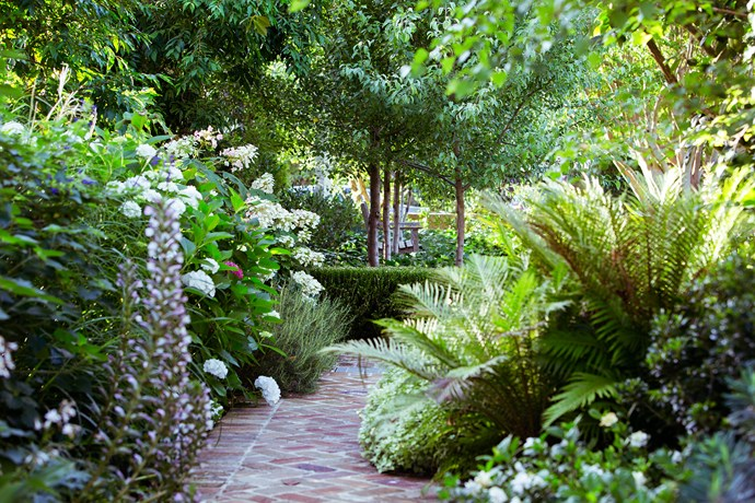 """When asked what his favourite part of the garden is, Peter doesn't hesitate – """"The border around the house is my favourite,"""" he says. """"I like walking around there to see what's happening. There's always something growing or changing."""""""