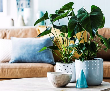 10 of the best air-purifying plants