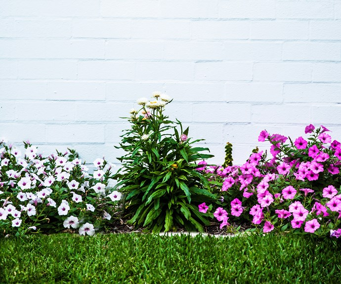 summer flowering plants