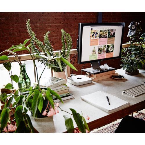 The best indoor plants for australian offices homes - Indoor desk plants ...