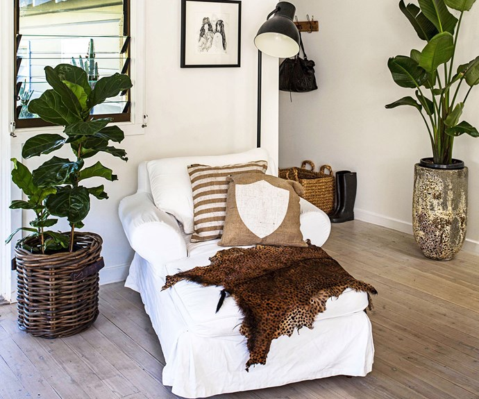 fiddle lead fig