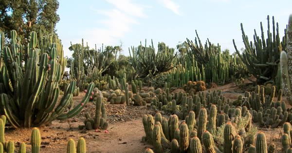 Cactus Country The Largest Cactus Garden In Australia