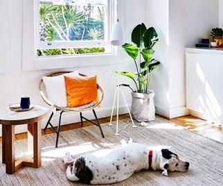 Sunny Bondi apartment