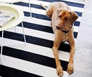 13 pet accessories so stylish you won't have to hide them!