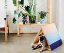 DIY pet playhouse