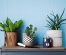 Say goodbye to flowers! Plant delivery is where it's at