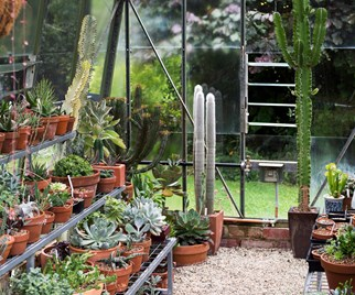succulent greenhouse