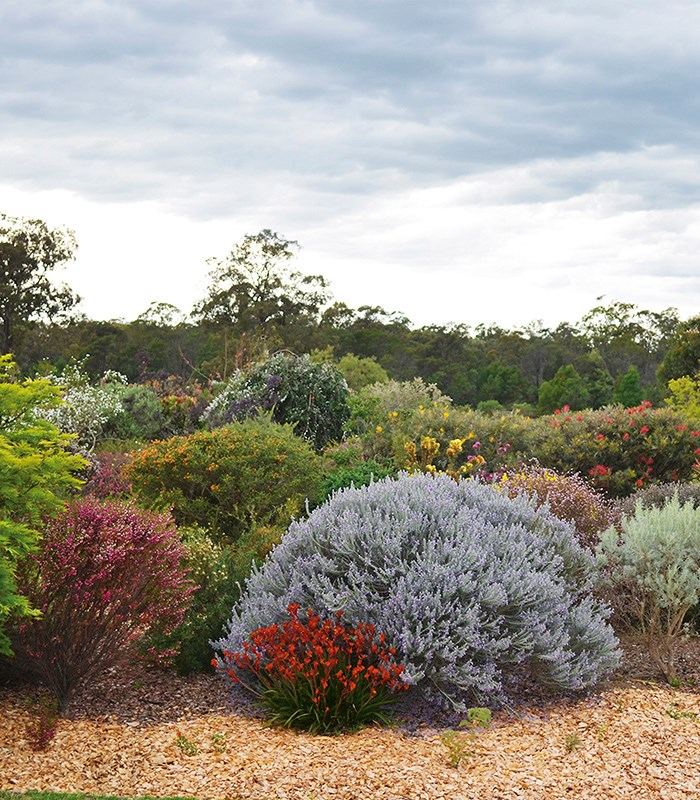 how to pick australian native plants for your garden