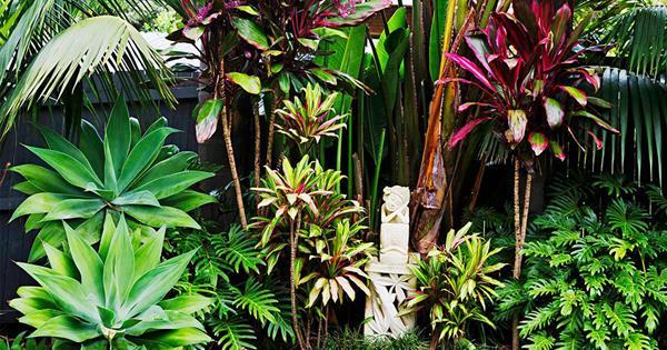 A Balinese Inspired Garden In Sydney S Northern Beaches