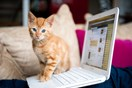 Here's why your cat keeps lying on your stuff