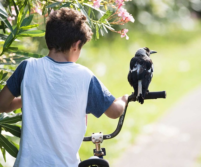 How a magpie helped to heal a family
