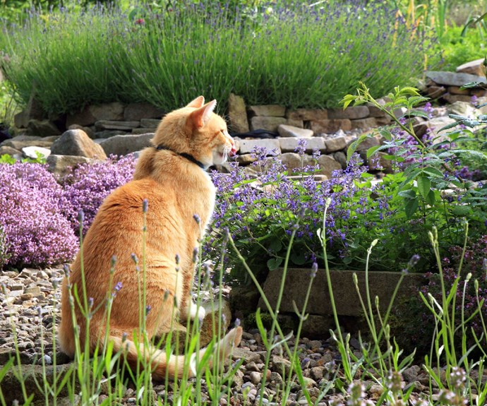 How to make a cat-friendly garden