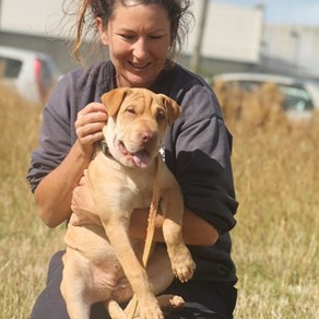 5 dogs who need a forever home